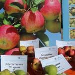 Äpfel oder Birnen