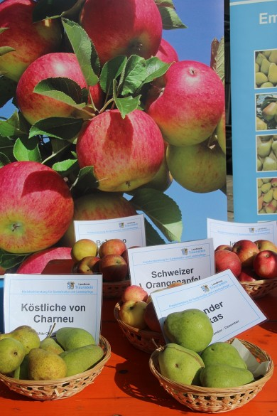 Apfelmarkt TS 2014_Aepfel klein