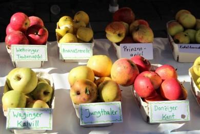 Alte Apfelsorten aus Bayern