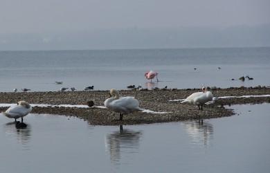 Flamingo3_Ausschnitt_klein