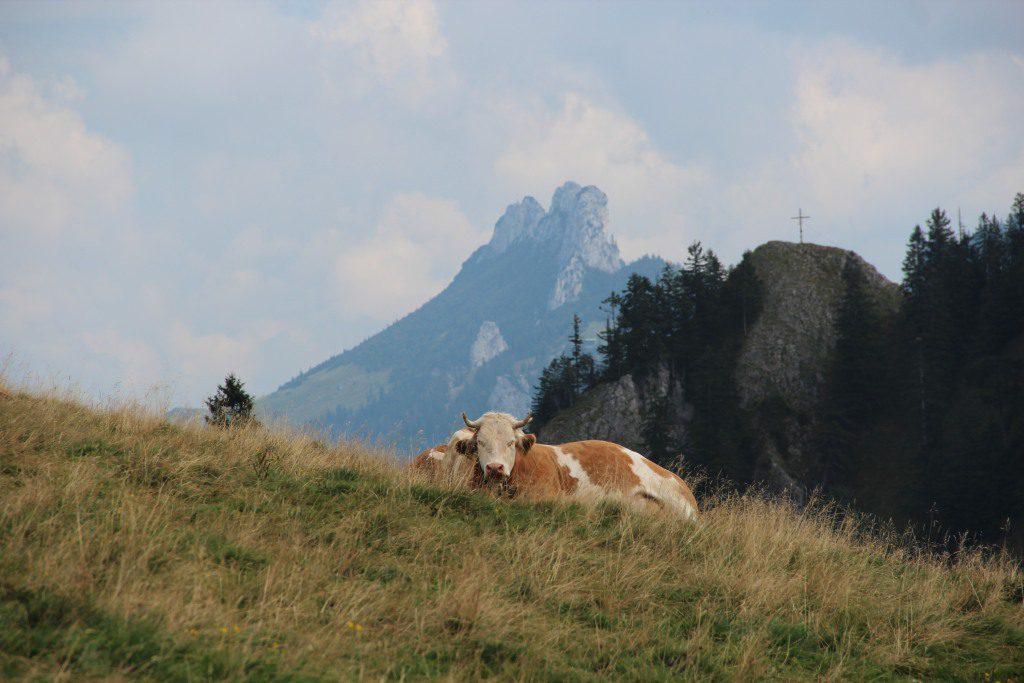 laubenstein-blick-zur-kampenwand